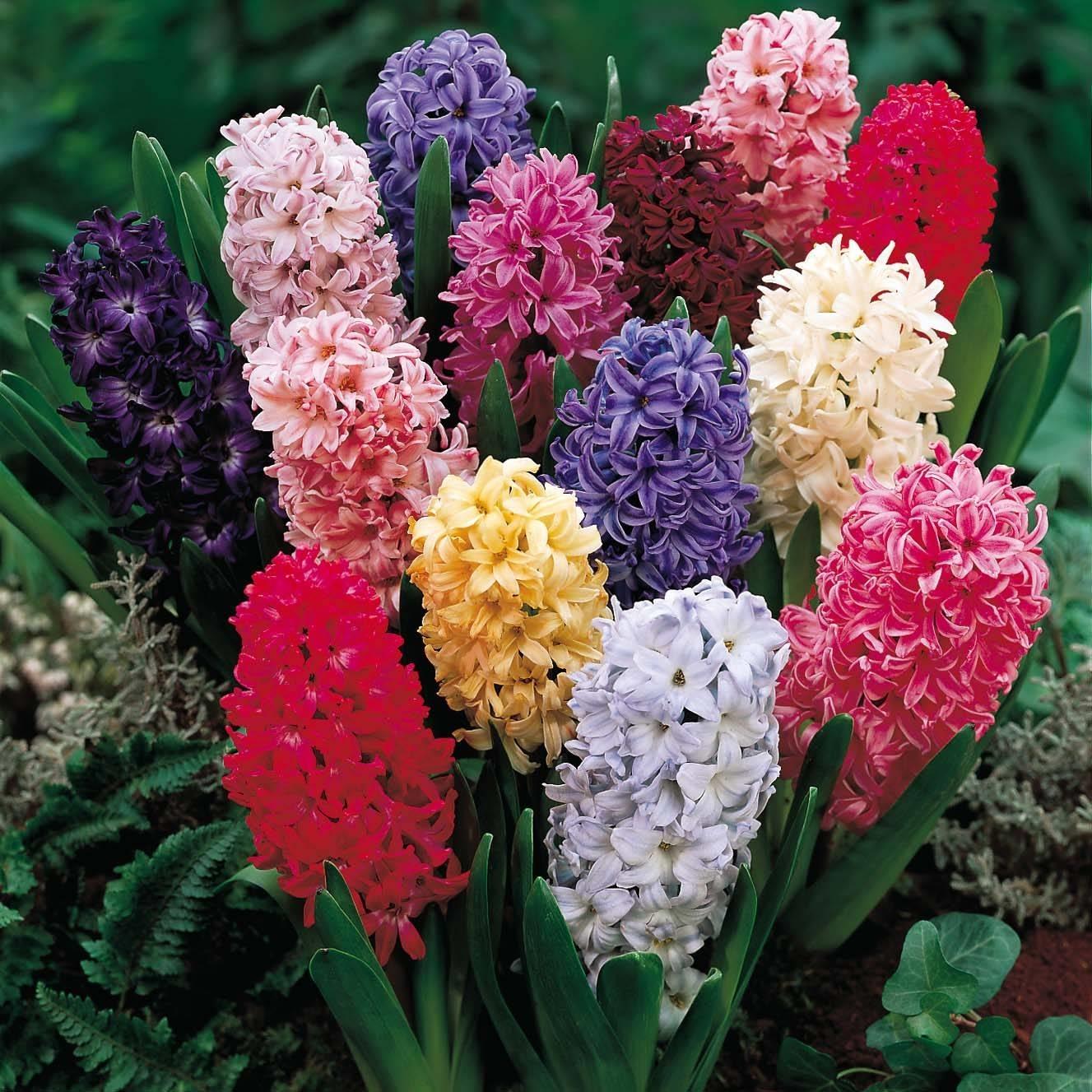 Che Cosa Sono I Bulbi bulbi da fiore - casa giardino
